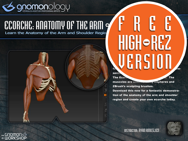 Sculpting Anatomy in ZBrush (tutorial added pg 3) - Page 4