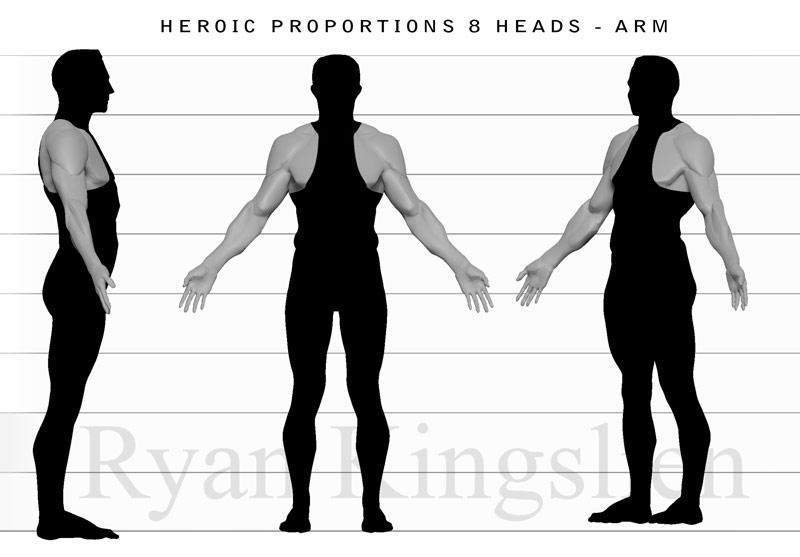 Proportions_8head_arm.jpg