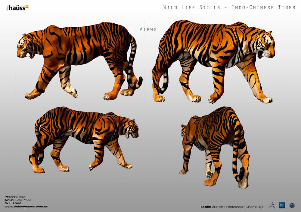 Wild Life Stills Tiger