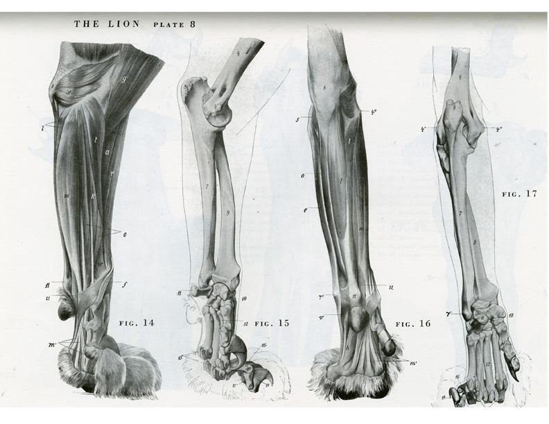DWIV - 3D - marcomaxbonaria - Daeleonis