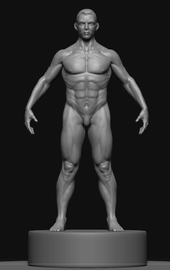 rmale body refined backperspective ZBC.jpg