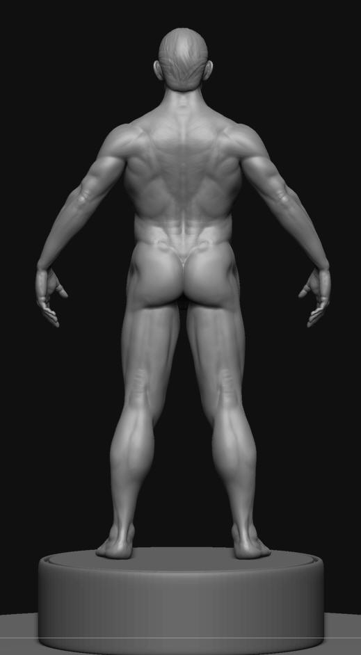 rmale body refined perspective ZBC.jpg
