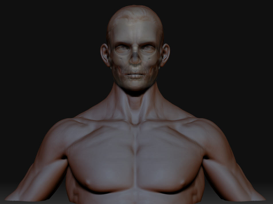 male bodyastaged refined for zbc inner skull.jpg