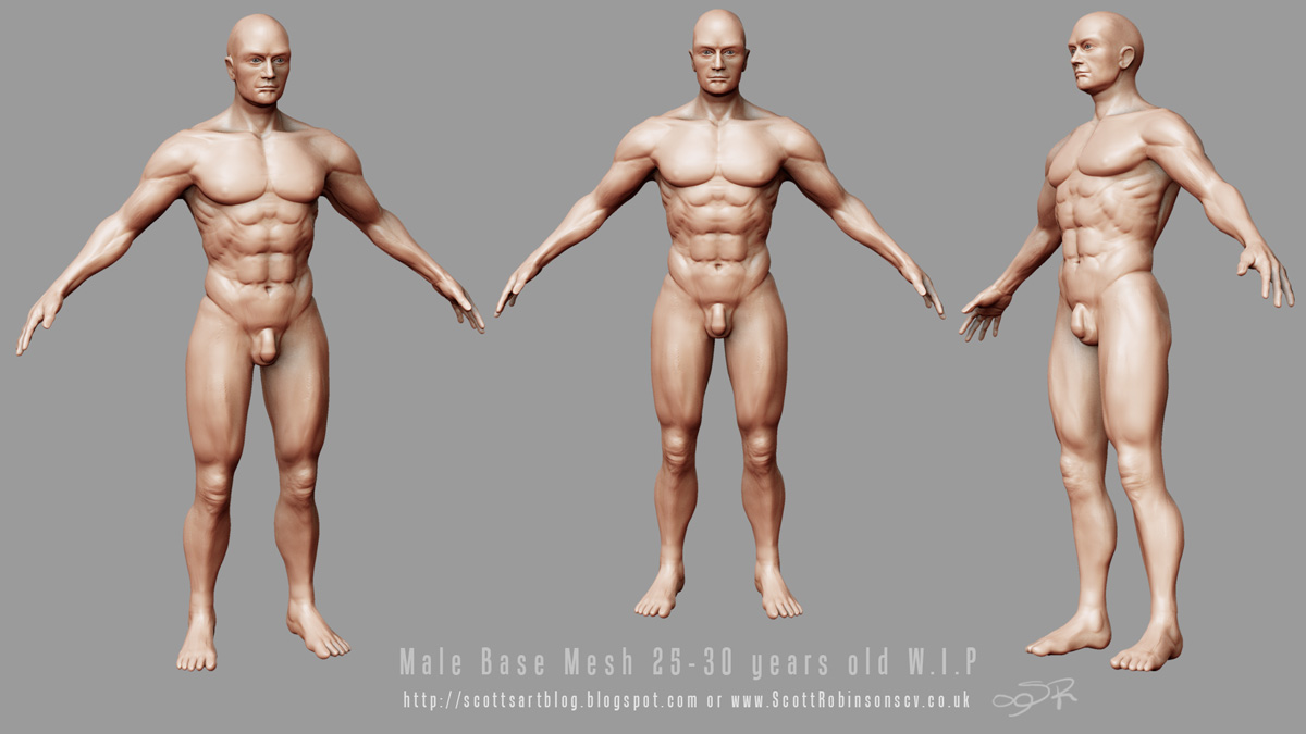 wip_male_anatomy.jpg