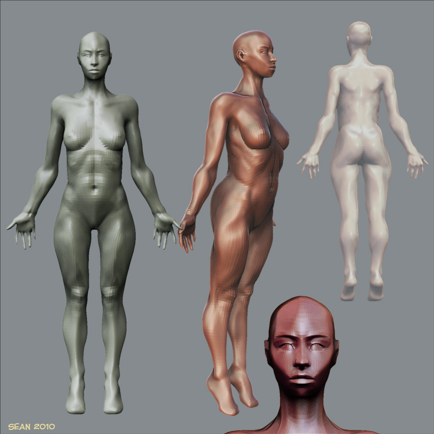 anatomy-render-2.jpg