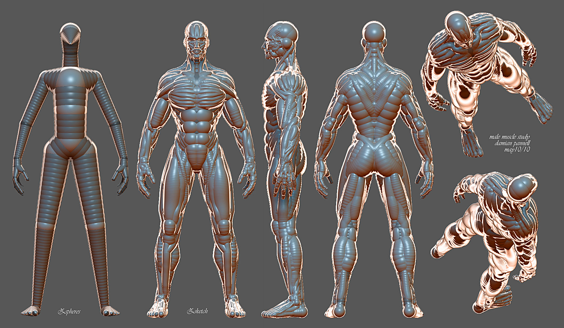 skinless human study, Muscles