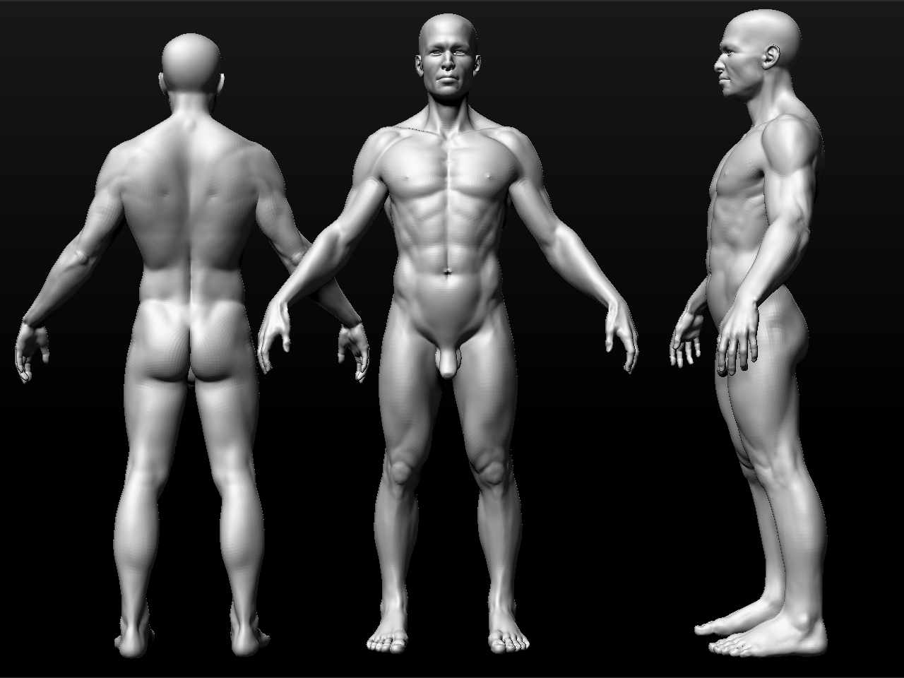 Another Anatomy Model