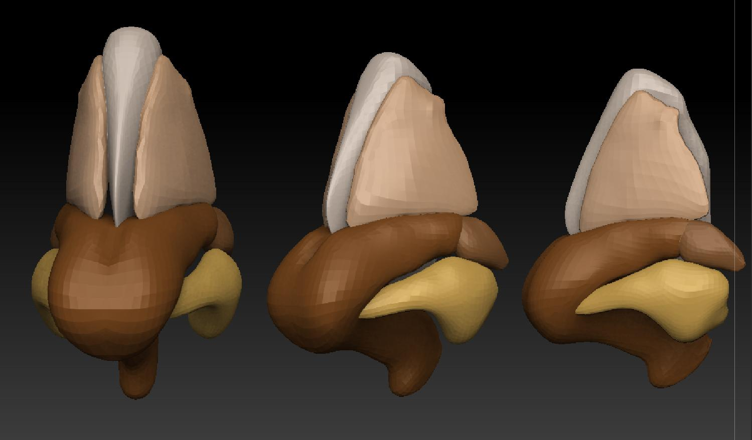 Free Models For Ecorche And Anatomy Study Page 2
