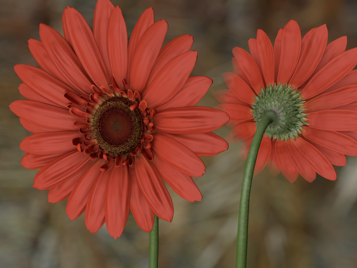 05_Gerbera_cinema_02.jpg