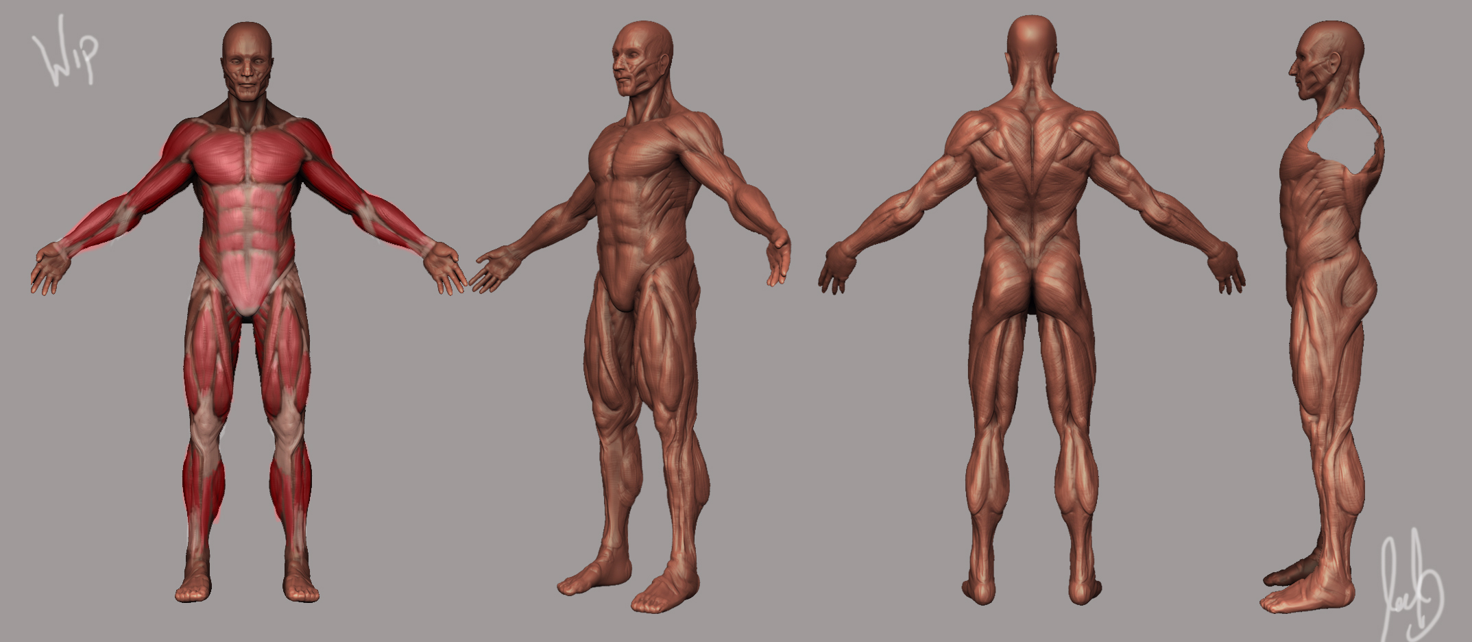 my sculpts, Muscles