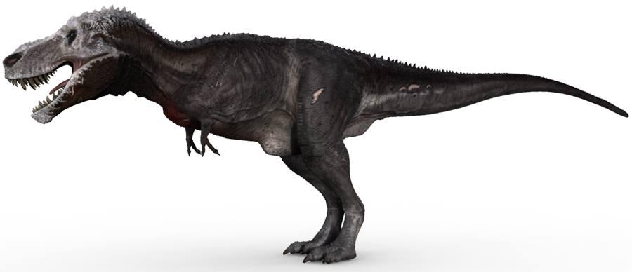 Tyrannosaurus Rex  Whe...