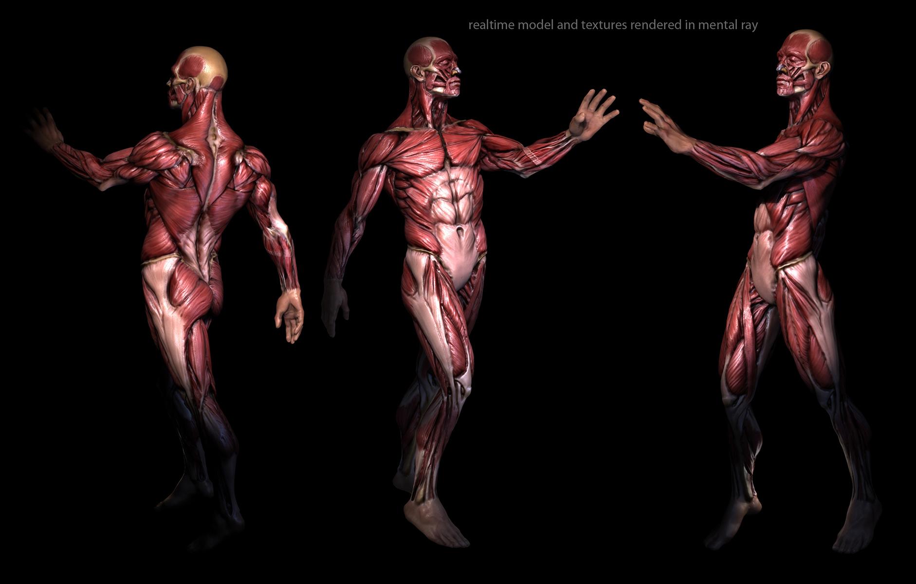 Male Anatomy Model App