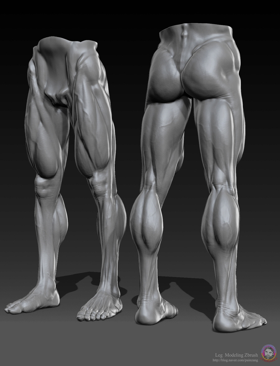 Human Anatomy 3d Sculpting Videos In Zbrush By Painzang Zbrushtuts