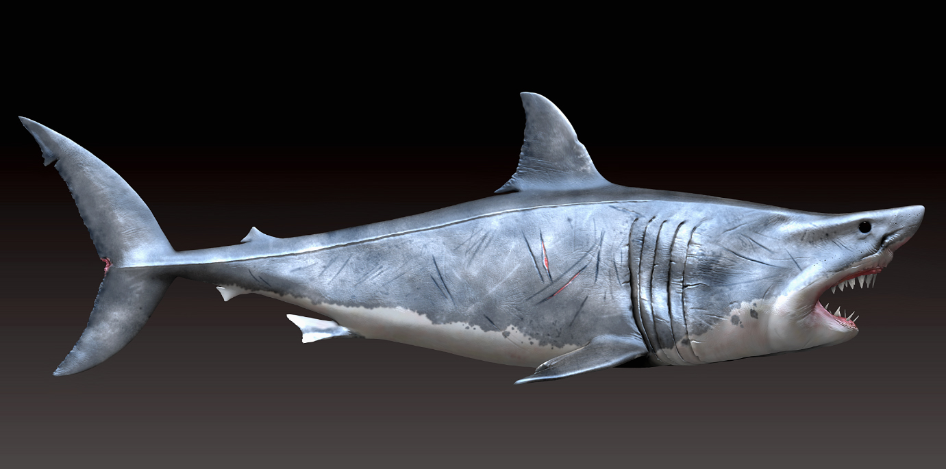 great white shark side view