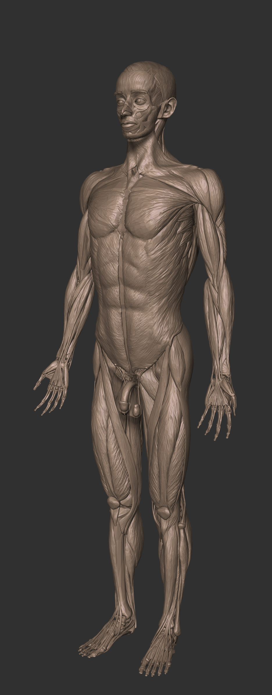Full anatomy model free download