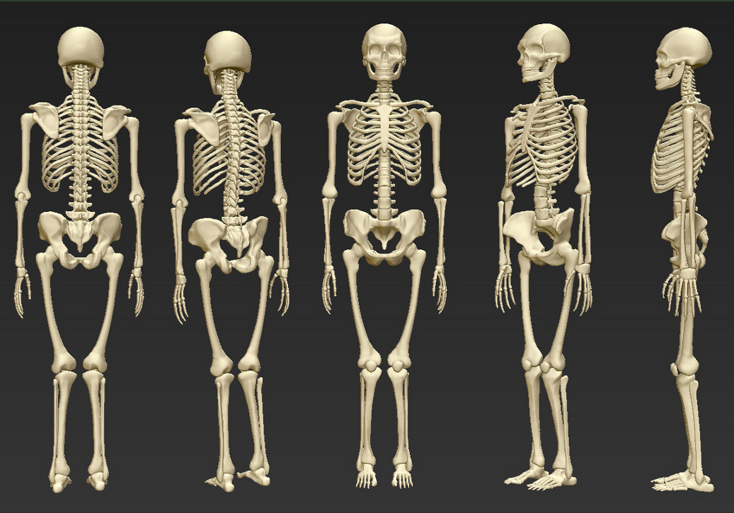human skeleton (feedback apprciated), Skeleton