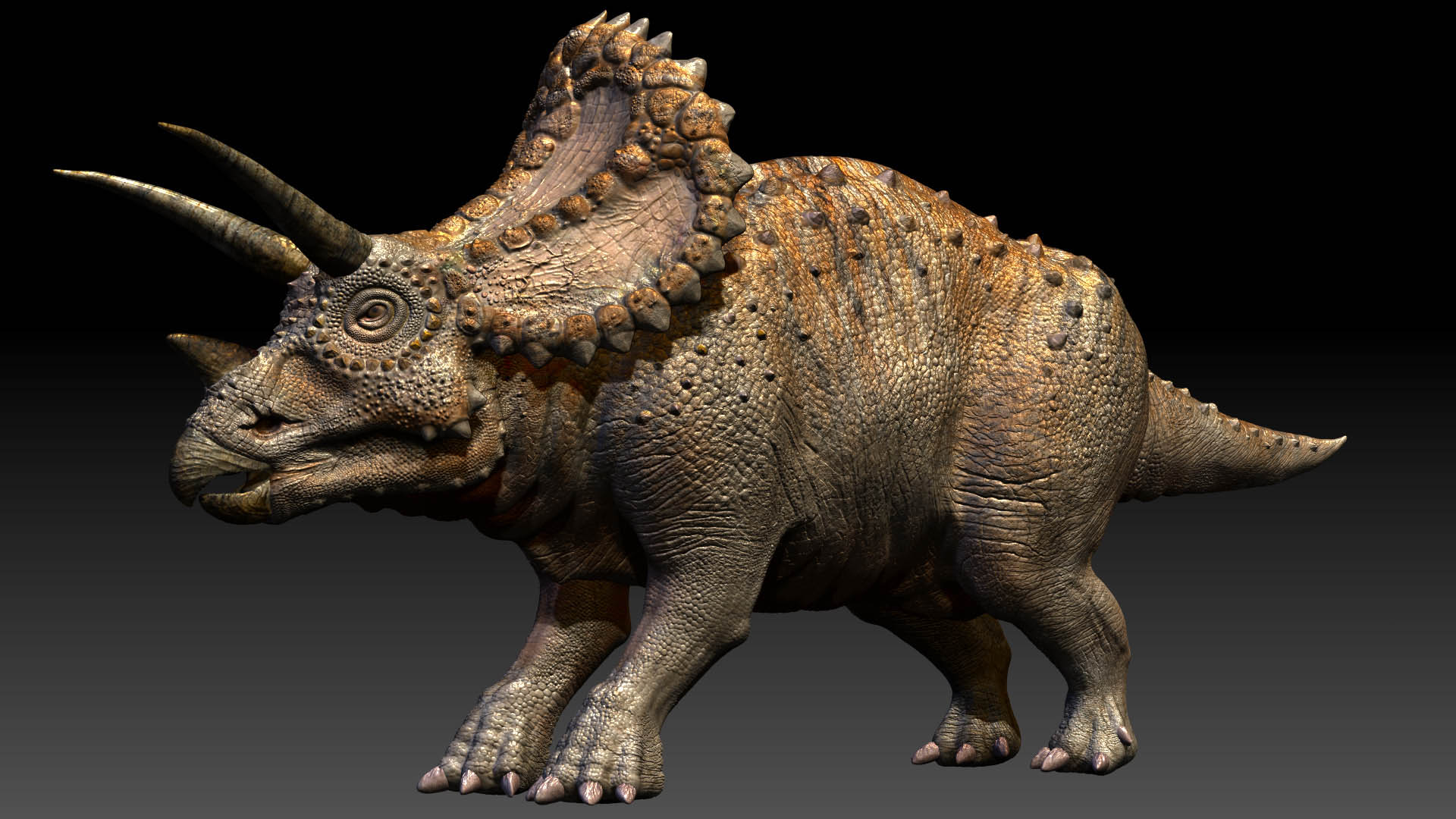 a look at the triceratops hottidus Triceratops horridus hatchling jolly replica (le 1000)  triceratops is the very first product of the rebor club selection line, it's a statue made of the.
