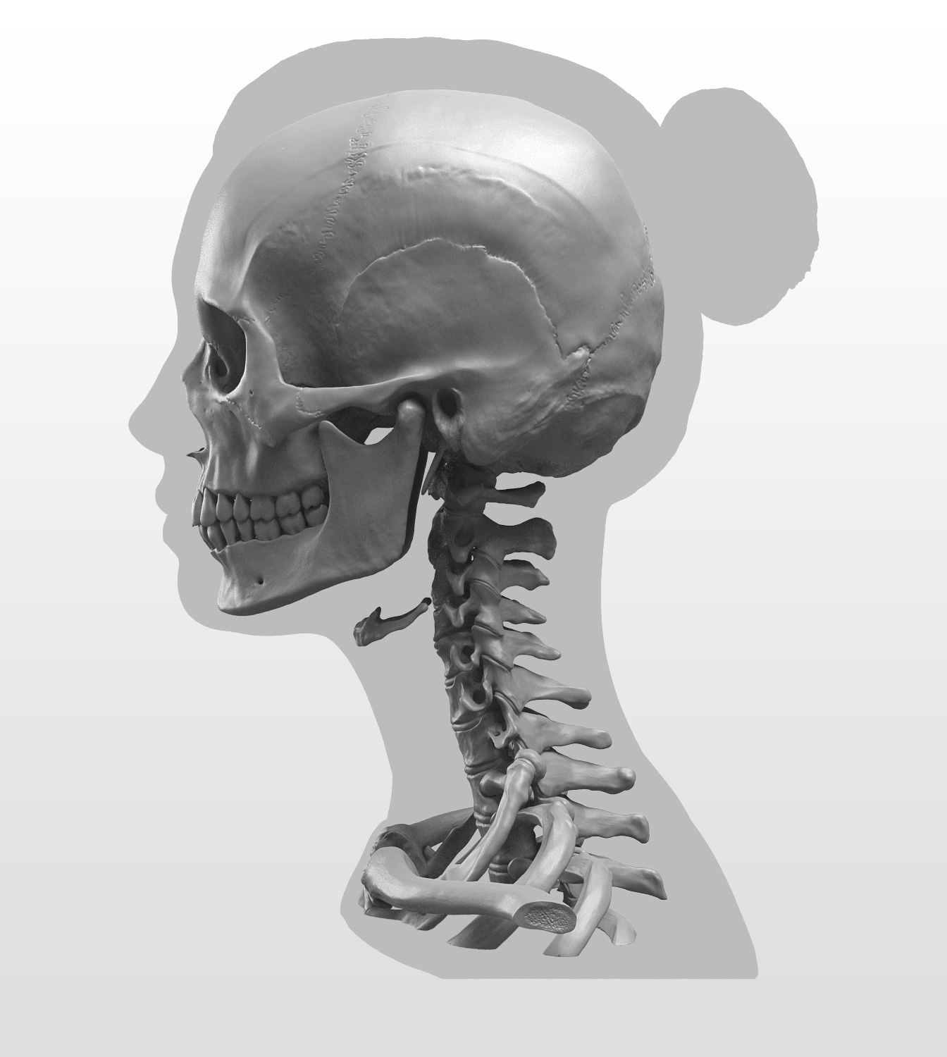 New Masters Academy: Anatomy of the Head Series