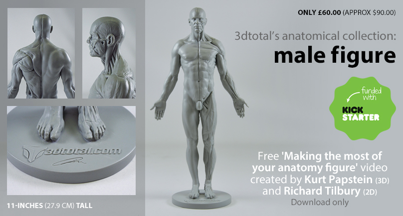 The First Affordable Anatomical Figure
