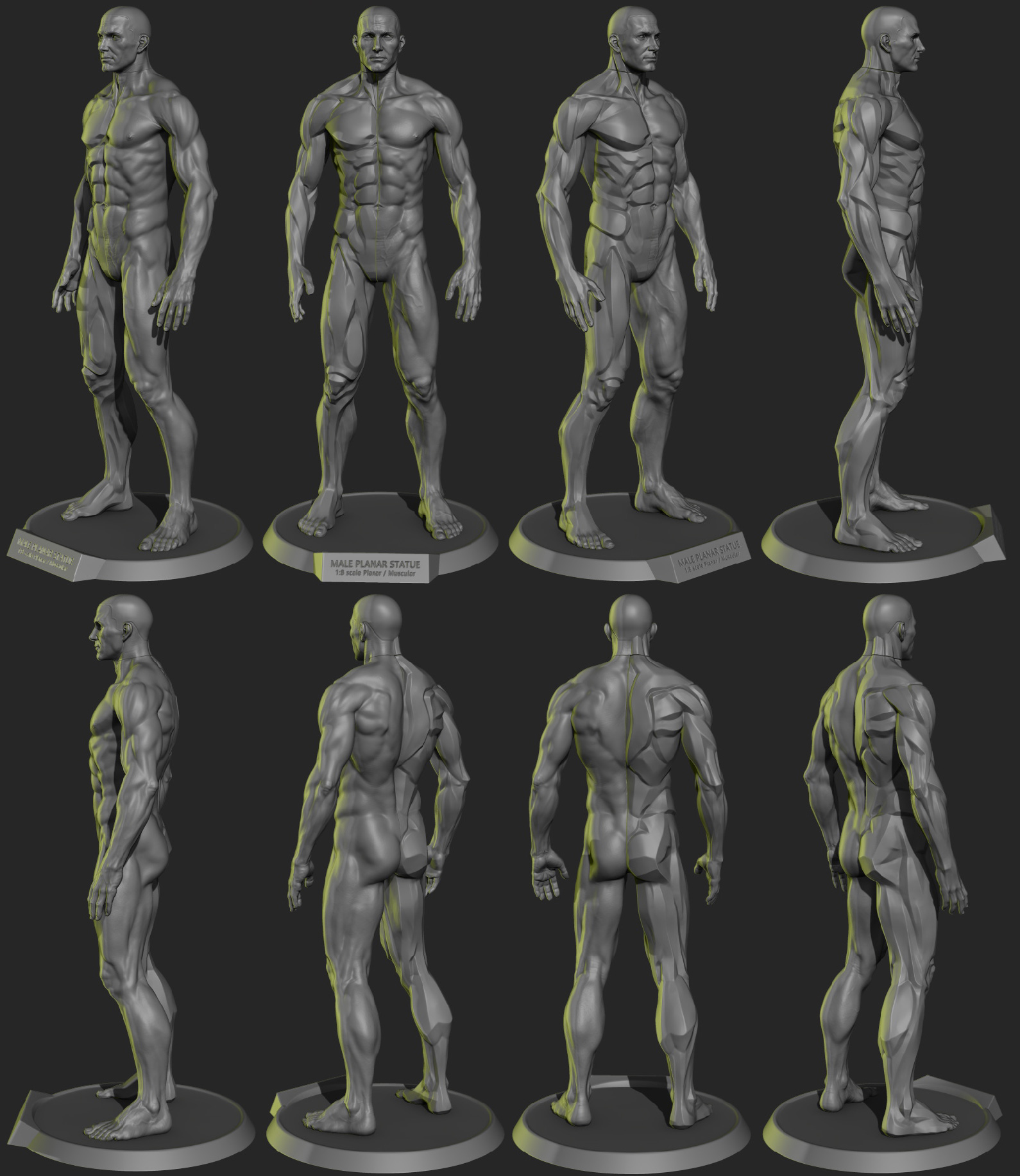 Male Anatomy Model Gallery - human body anatomy