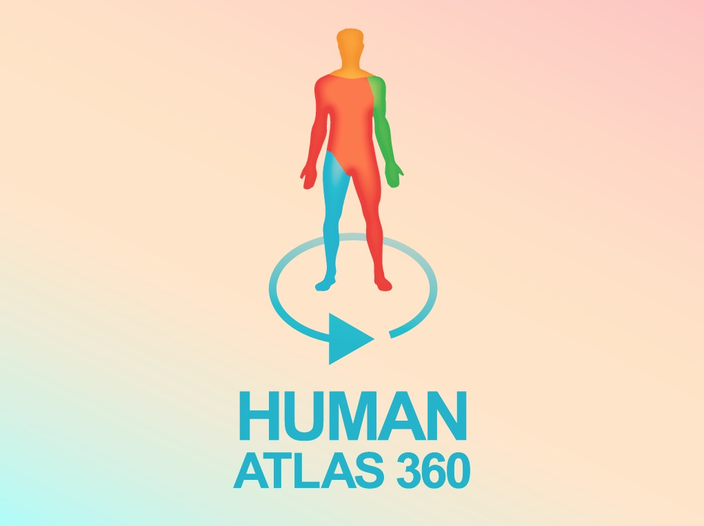 Anatomy for sculptors - human atlas 360