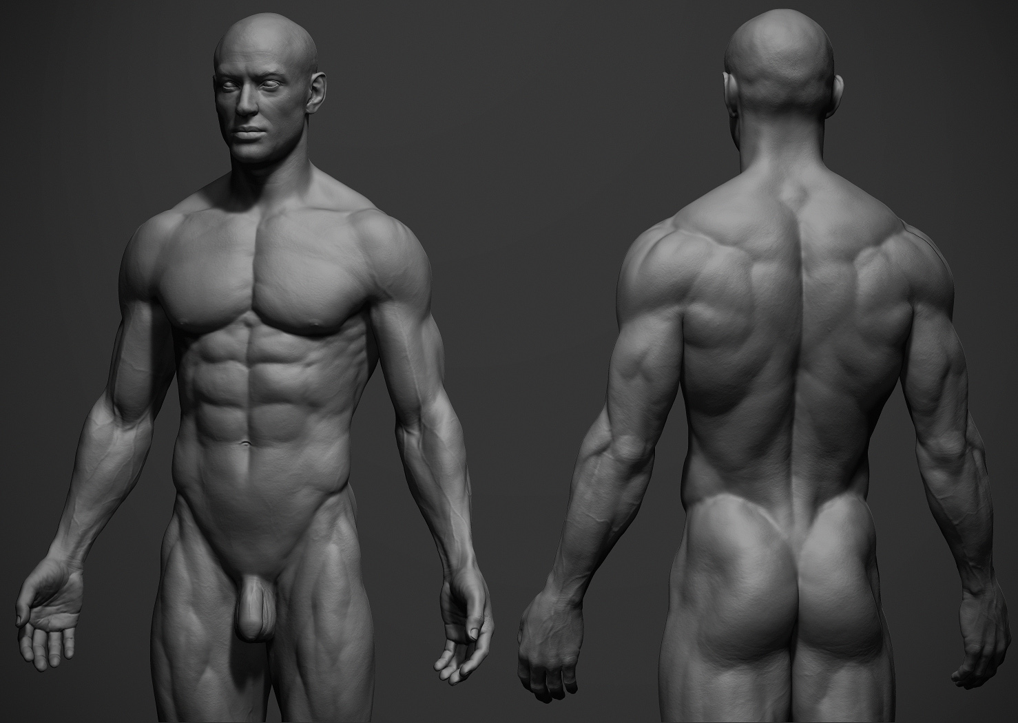 the male anatomy gallery - learn human anatomy image, Human Body