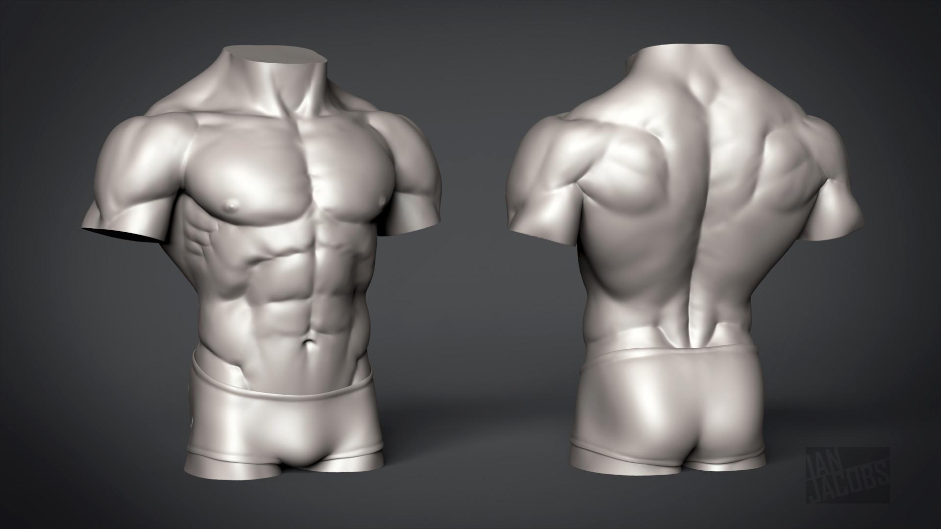Torso Male Images - human anatomy organs diagram