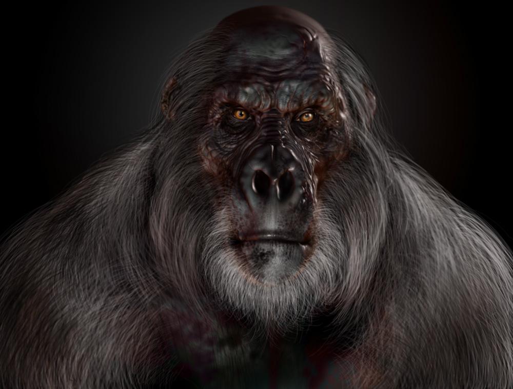 grey gorila