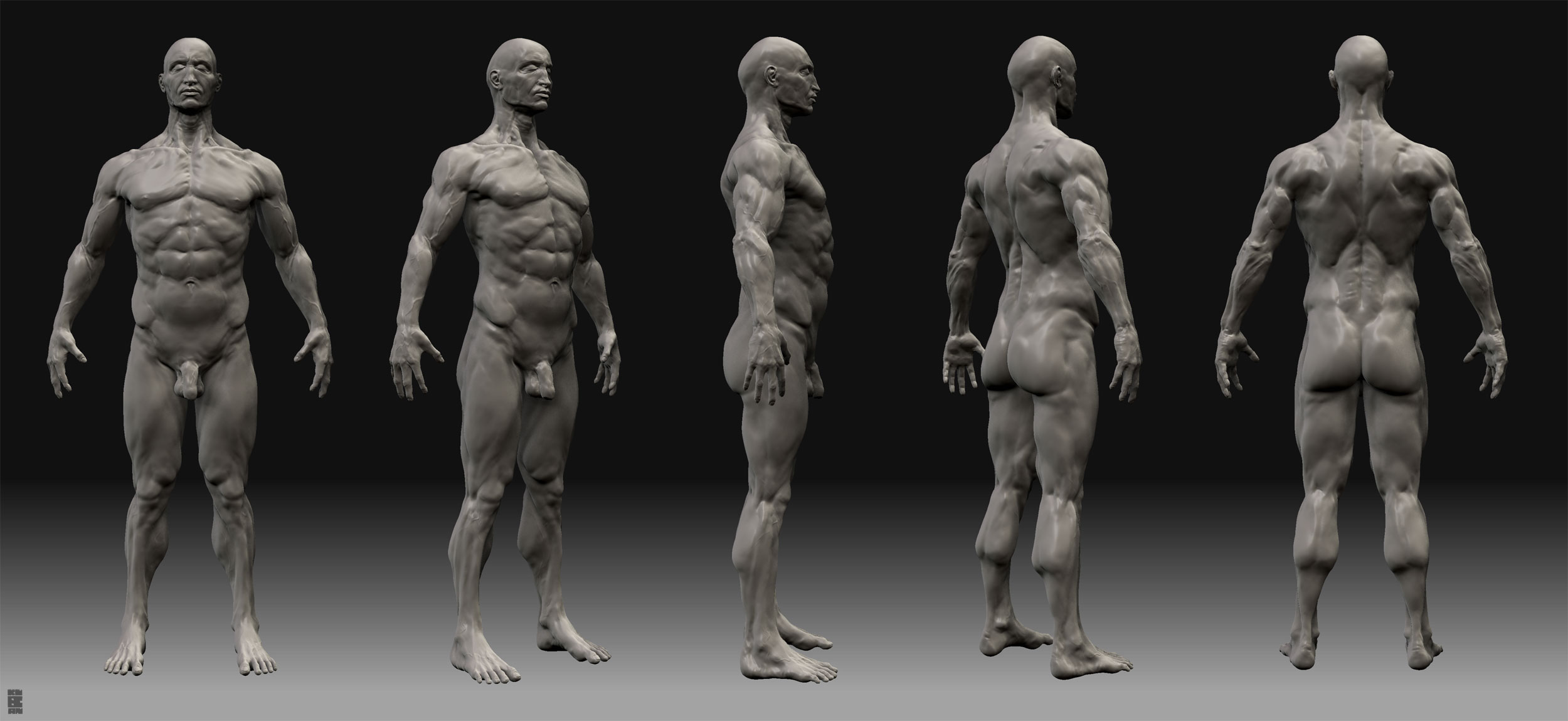 man anatomy study