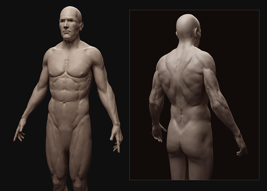 Male Anatomy Study - W.I.P.