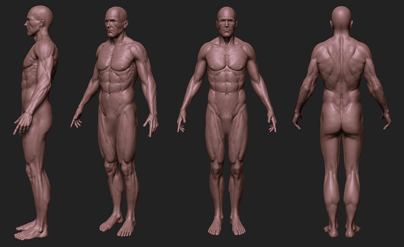 Male Anatomy Study - W.I.P.